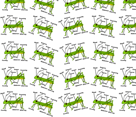 Grasshopper Anatomy fabric by gigirn46@aim_com on Spoonflower - custom fabric
