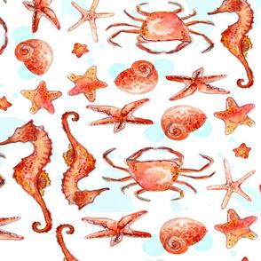 Starfish and Seahorses