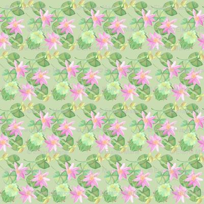 Lilypad3