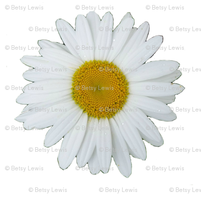 DaisyCroppedTransparent