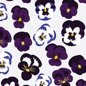 Pansies_shop_thumb