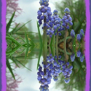 Muscari Reflection in Pond