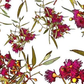 Eucalyptus leucoxylon rosea – Pink Flowering Yellow Gum   CLOTH