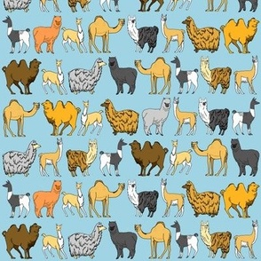Camels and Llamas and Alpacas