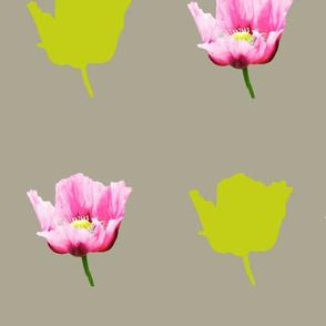 poppies_FQ
