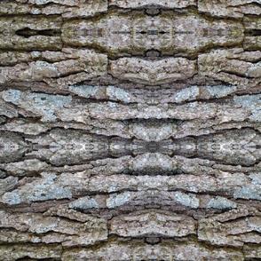 Oak Bark 1