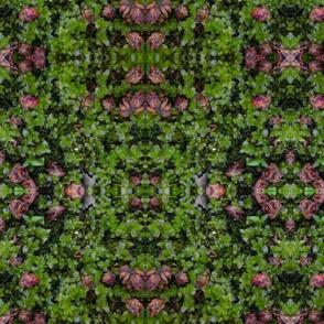 Moss and buds
