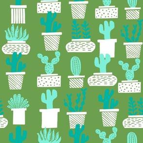 cactus // cactus houseplant houseplants terrariums potted plants cacti