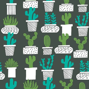 cactus // houseplants plants cacti succulents plants potted plants