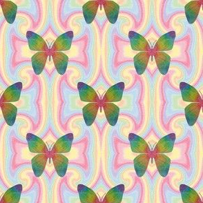 Rainbow mandela butterfly