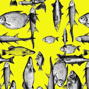 gone_fishin_module_yellow