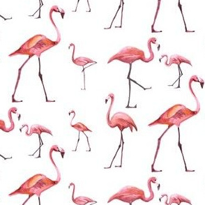 Flamingo Park - White