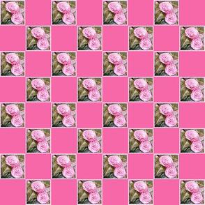 Camellia   1 inch Check