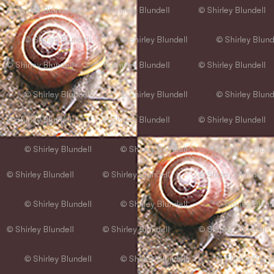 Snail   1 inch Checks