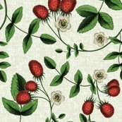Rberriesonwhite_shop_thumb