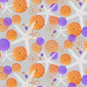 Starfish, Sea Urchins & Sea Glass on Gray
