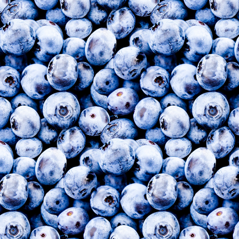 Blueberries small scale fabric by versodile on Spoonflower - custom fabric