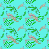 Tropical Peacocks