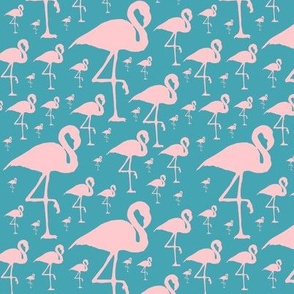 Flamingo flock