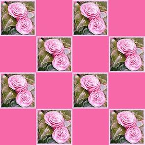 Camellia   2  inch Check
