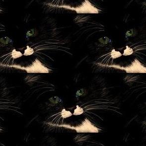 Mimo Kitten