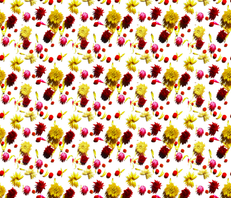 Cactus Flowers fabric by sharksvspenguins on Spoonflower - custom fabric