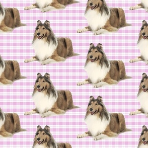 Collie on Pink Plaid