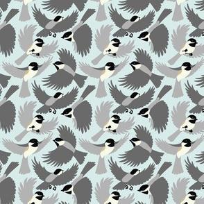 Chickadees Natural