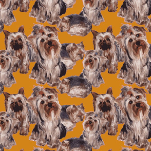 Yorkies on Orange background