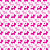 Gatti rosa