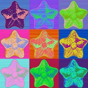 warhol starfish