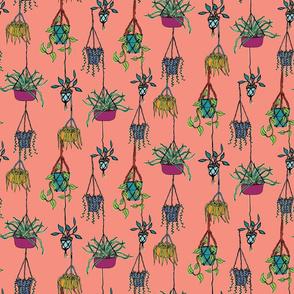 Hanging Plants - Peach