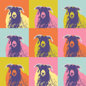 sheep-face-multi