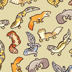 chub geckos