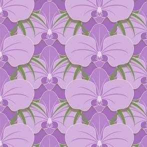 Zen Orchids