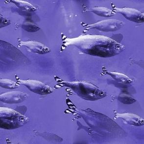 purple_big_fish2