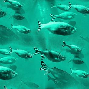 jade_big_fish