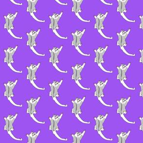 sugar glider purple