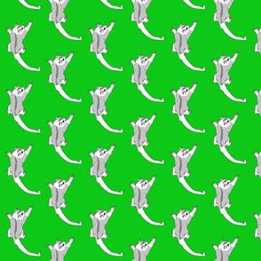 sugar glider green