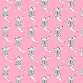 sugar glider pink
