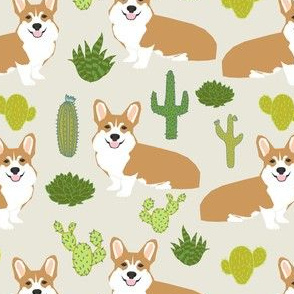 corgi corgis cactus plants light background nursery baby kids sweet dogs dog pet puppy