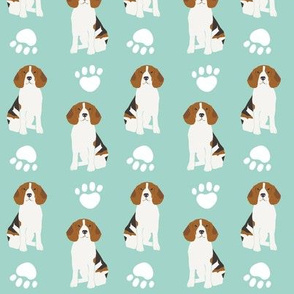 beagle beagles mint dog dogs cute pet dog sweet dogs animals pet owners
