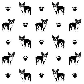 boston terrier black and white baby kids nursery sweet dog dogs baby pet pets