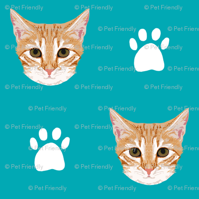orange tabby cat cute cat cats kitten kitty cute paws turquoise cats cat lady