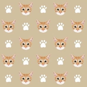 orange tabby cat kitten kitty cute cat cats paws print khaki neutral kitten