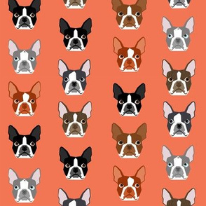 boston terriers cute dogs pet dog orange salmon dogs pet dogs fabric