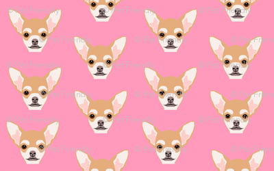 chihuahua cute dog dogs face pet dogs chihuahuas