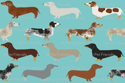 doxie dachshund dachshunds dogs dog pet dog doxie dog doxies cute puppy