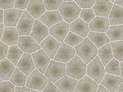petoskey stone - natural, small