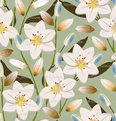 Lily Field 4